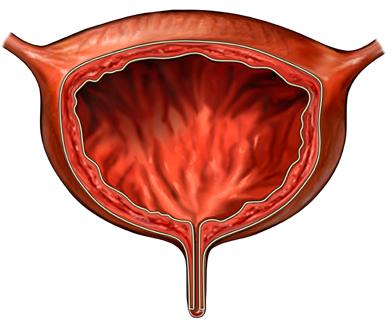 анализ крови на ige аллергия