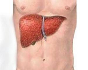 Лечение и печень при дерматите