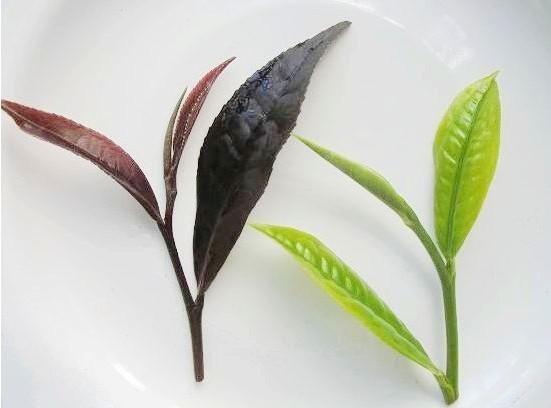 пурпурный чай чанг шу кемерово